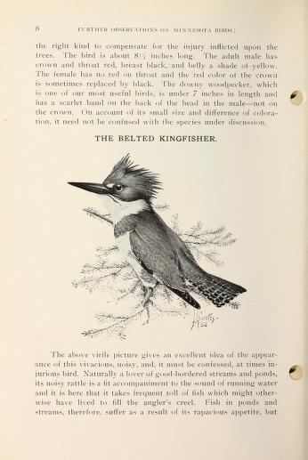 page image featuring a black and white illustration of a belted kingfisher male perched on a twig. Page also has text.
